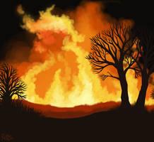 Fire by Nothofagus-obliqua