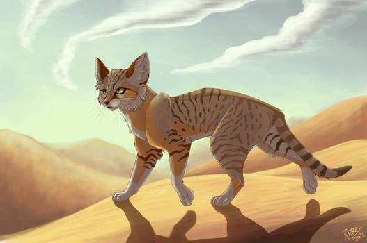 Dunes kitty