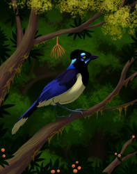 Weekly obscures 2: Plush crested jay
