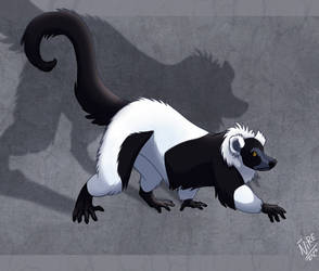 Weekly obscures 12: Black And White Ruffed Lemur