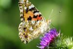 butterfly on flower by 2hide4u