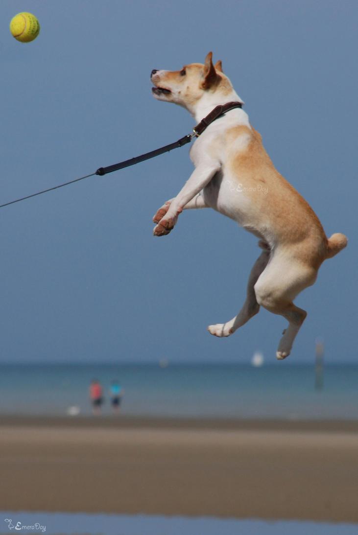 Speed dating waterloo flying dog