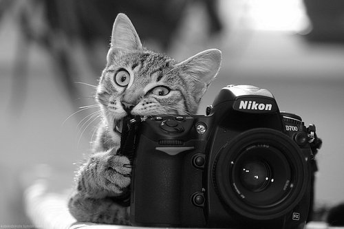 Camera by HoneyMoon16