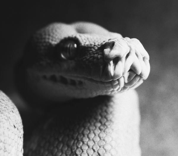 portrait of a serpent II by robinism