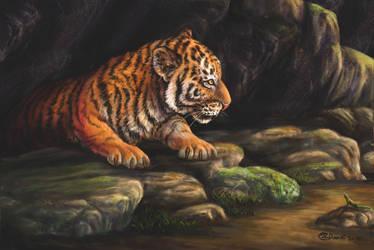 Tiger cub by Bisanti