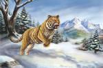 Siberian Tiger hunting