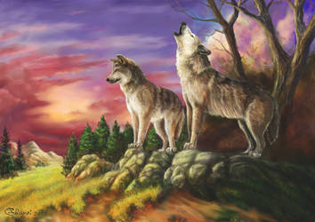 Wolf couple 2 by Bisanti
