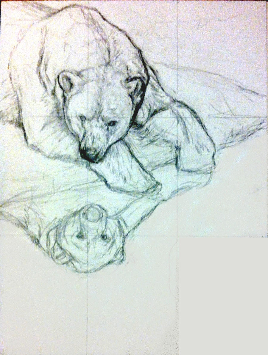 Polar Bear - sketch by Bisanti