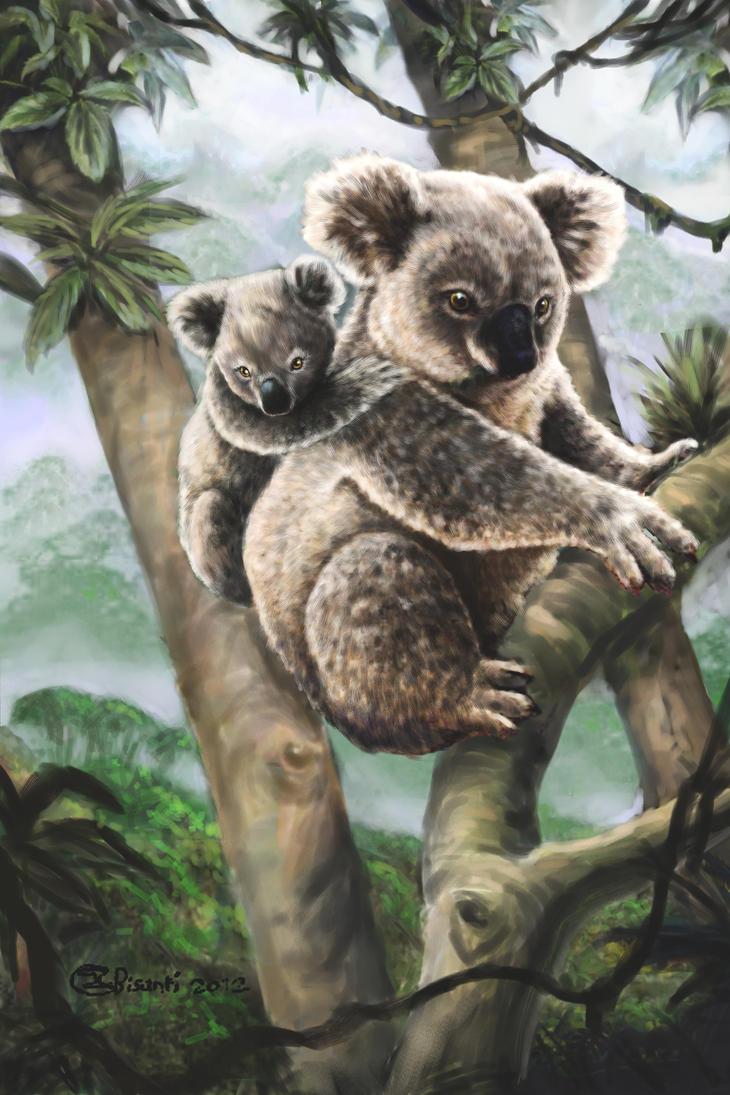 Koalas by Bisanti