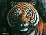 Eyes of the bengal tiger - traditional
