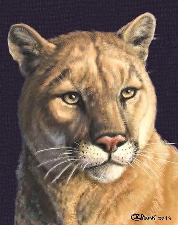 Puma Portrait by Bisanti