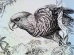 Eye glance - parrot portrait