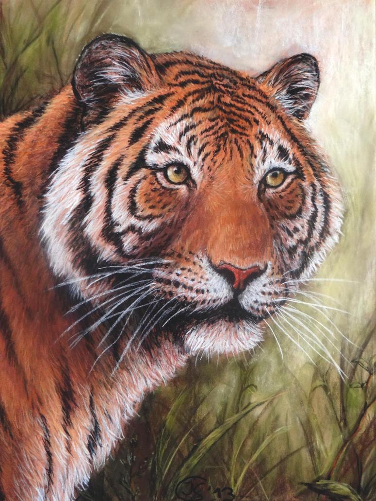 Bengal tiger - pastel portrait by Bisanti