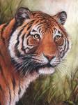 Bengal tiger - pastel portrait