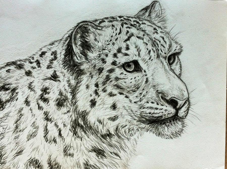 Snow leopard - portrait by Bisanti
