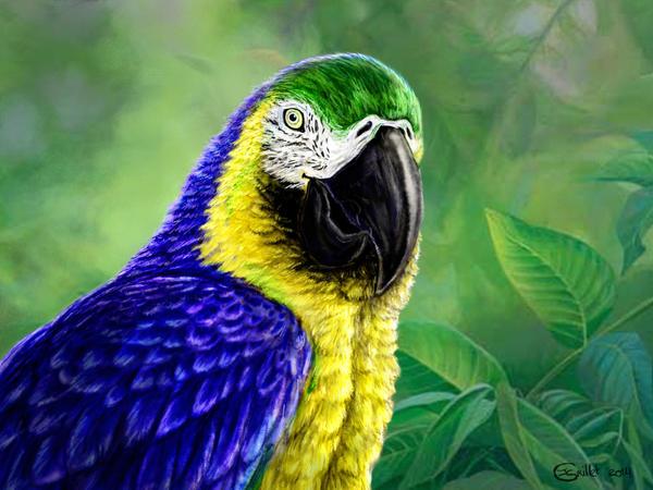 Rainforest treasure by Bisanti