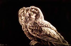 Owl black and white (Chouette de Tengmalm)