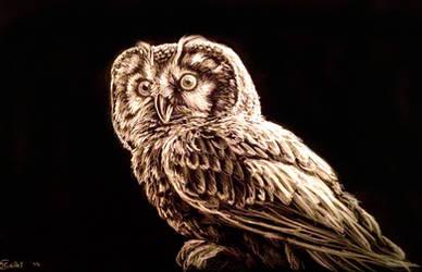 Owl black and white (Chouette de Tengmalm) by Bisanti
