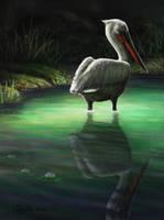 Pelican by Bisanti