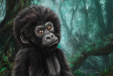 Mountain gorilla cub by Bisanti
