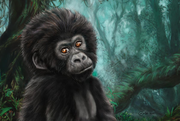 Mountain gorilla cub by Bisanti