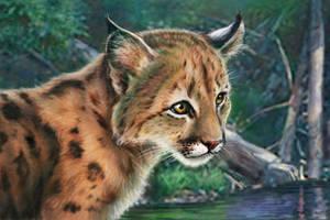 Lynx cub by Bisanti