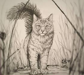 Domestic cat in the wild