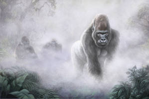 Gorilla in the mist