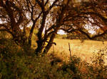 Meadowland stock by little-spacey