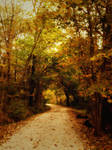 autumn forest path STOCK by little-spacey