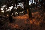Last Light forest stock