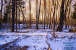 UNRESTRICTED Golden Woods background stock
