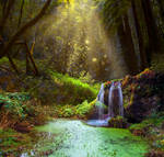 Forest Pool Premade Background