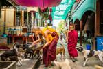 Feeding the Dogs, Mandalay Monastery