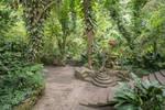 Jungle Wonderland Stock