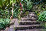 Jungle Steps 2