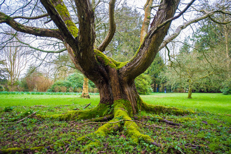 Fairy Tree Stock 2 by little-spacey