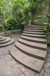 Jungle Steps Stock