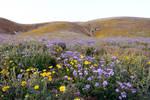 Mountain Meadow Stock 2