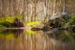 Fairy Woods Background Stock