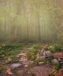 Premium Premade Background - Meadow Path