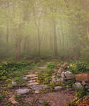 Premium Premade Background - Meadow Path