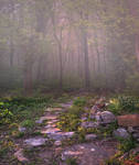 Meadow Path Background 2