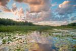 Sunset Pond Stock