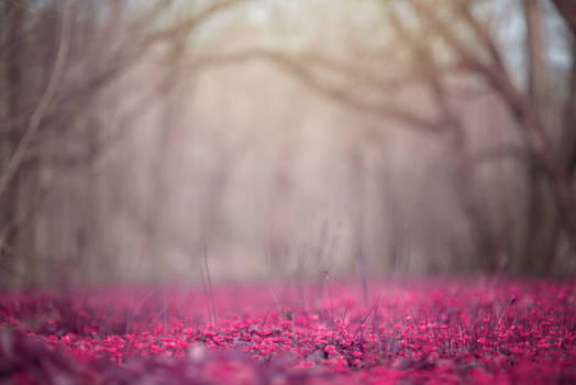Pink Meadow Background