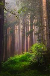 Siuslaw Forest