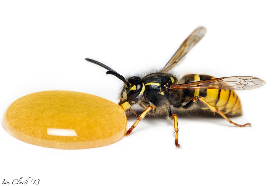 Showing collection  52  for Queen Wasp SizeQueen Wasp Size