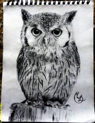 Owl (Buho)