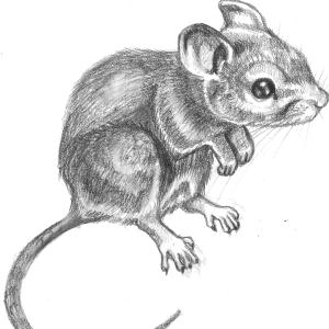 Cieszencja's Profile Picture