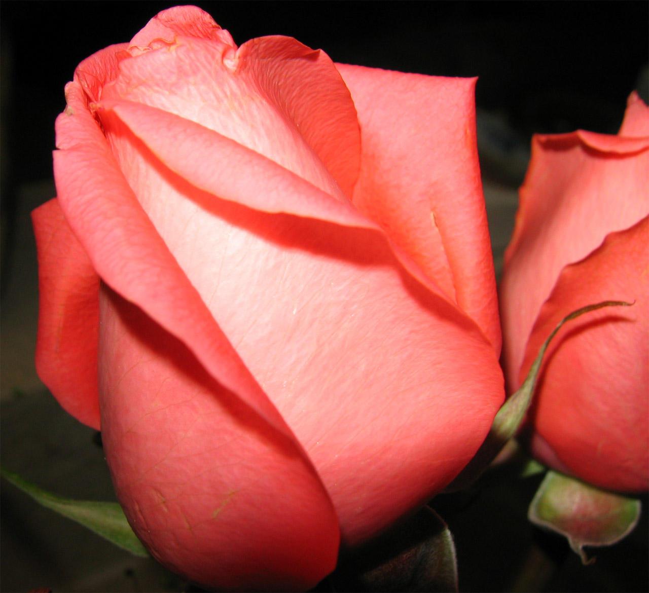 i love you rose wallpaper download